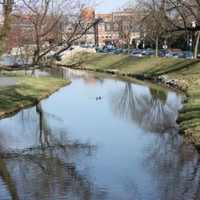 Duck Swimming in Carroll Creek