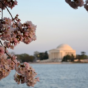National Cherry Blossom Festival 01
