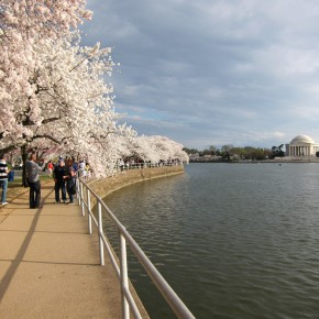 National Cherry Blossom Festival 10