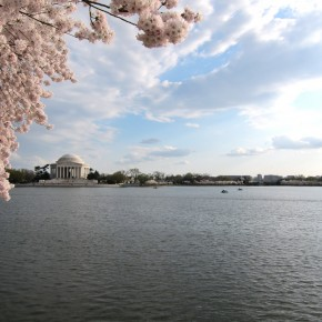 National Cherry Blossom Festival 19