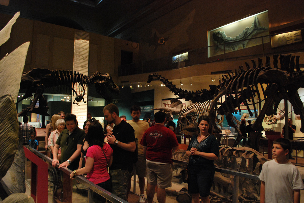 Museum Of Natural History Migratory Birds